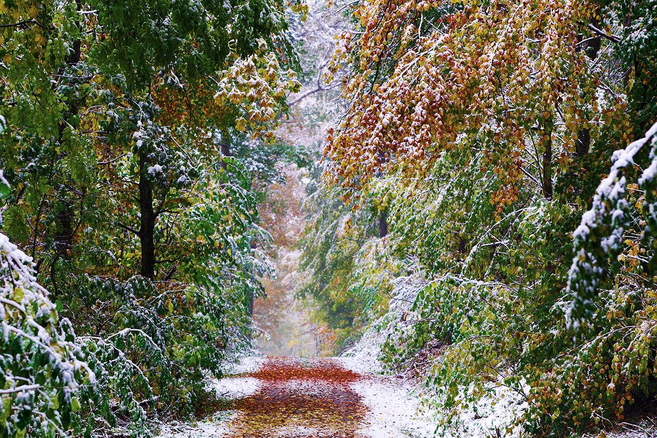Herbst: Schneefall aufs Herbstlaub