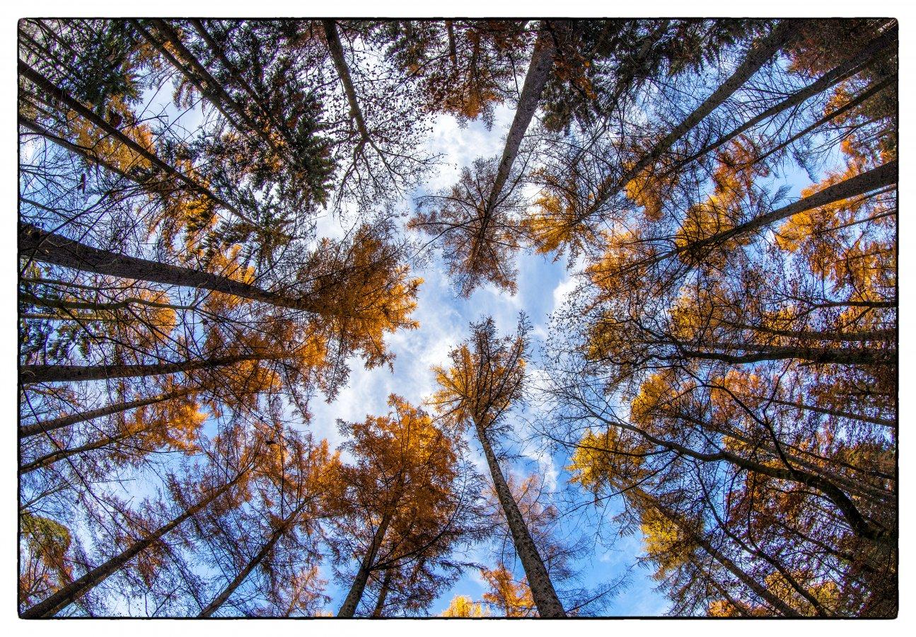 Herbst: Wald Senkrechte
