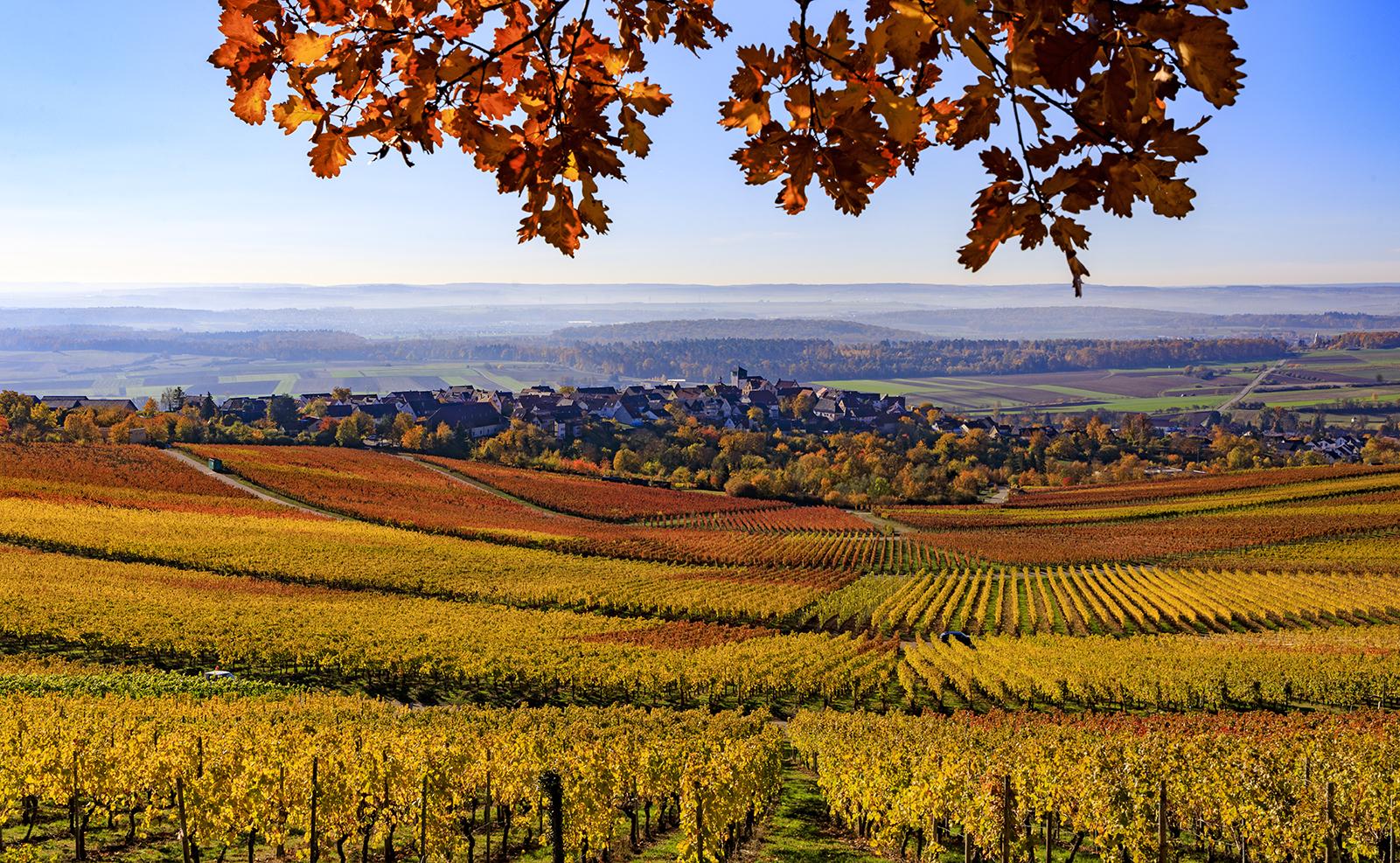 Herbst: Weinberge um Hohenhaslach