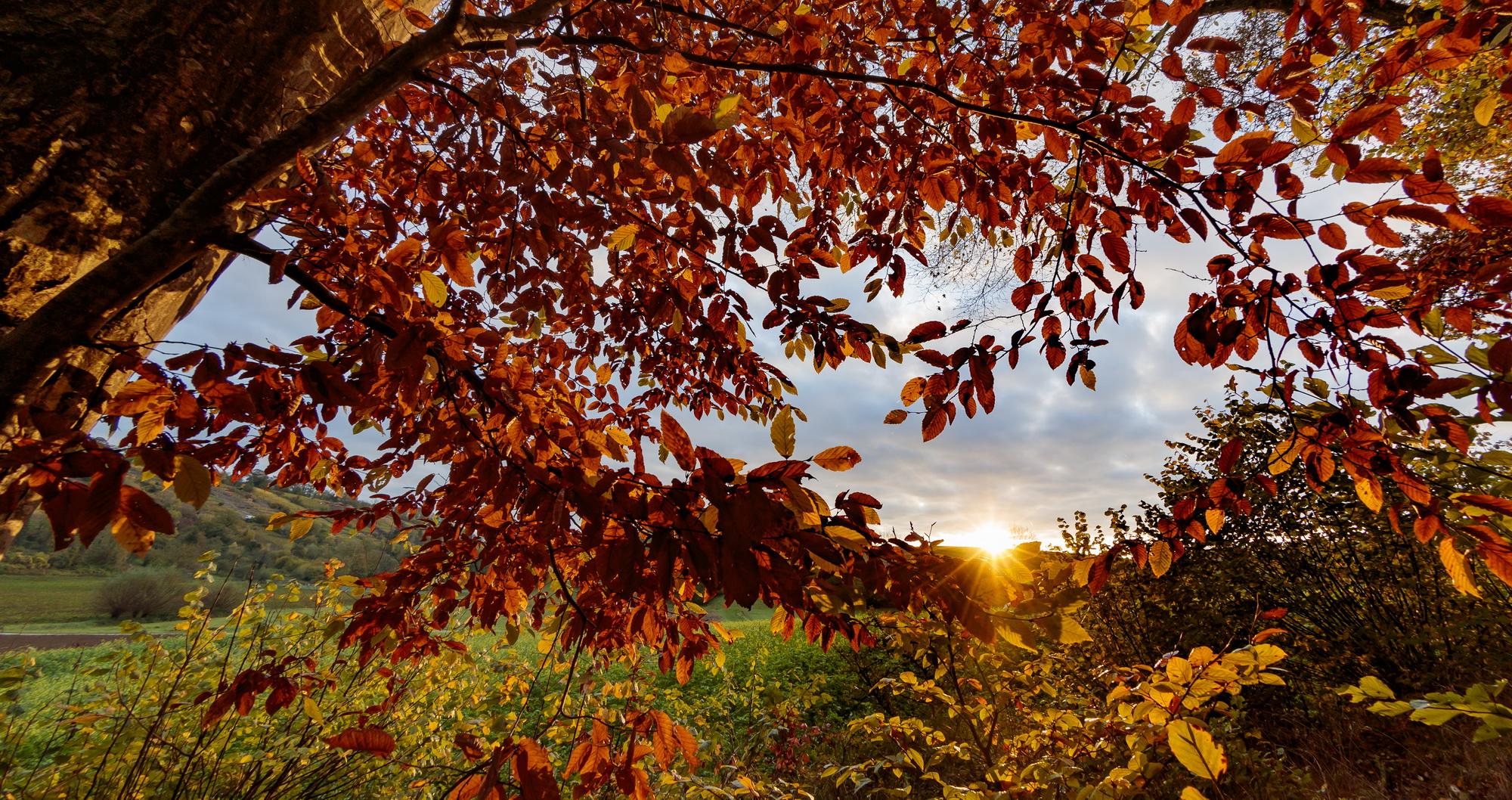 Herbstlaub, Herbstwald